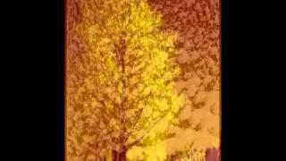 Robert Paul de Guia & W.Pilsak - Der Wald