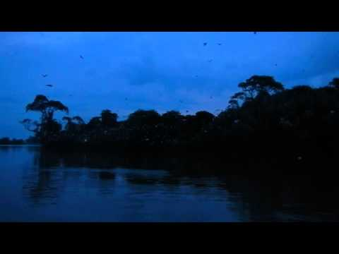 Sri Lanka,ශ්‍රී ලංකා,ceylon,nilwala Ganga Bird Island,matara (01) video