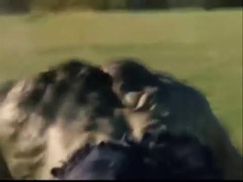The Incredible Hulk: Epic Battle