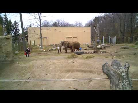 Elephants being trained