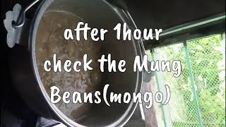 Easy Learn how to cook MUNG BEANS(monggo)