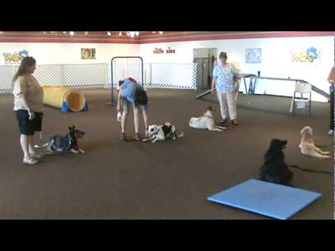 Villa La PAWS Advanced Obedience Graduation 10/1/11
