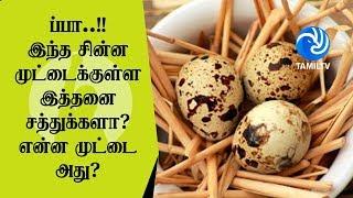 ப்பா..!! இந்த சின்ன முட்டைக்குள்ள இத்தனை சத்துக்களா? என்ன முட்டை அது? – Tamil TV