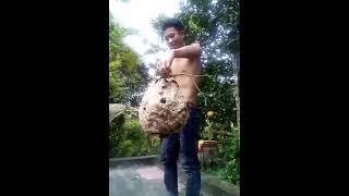 Video Hài Hước Thanh Niên Nghịch Dại Tổ Ong Và Cái Kết Không Cười Không Phải Người XemChuaTV