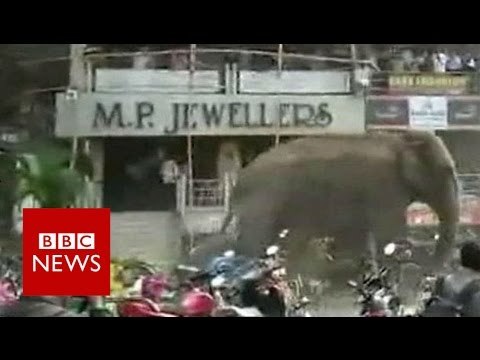 Elephant rampages through Indian town of Siliguri - BBC News