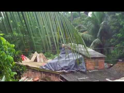 Little Seed In On Coconut Tree At kolkata