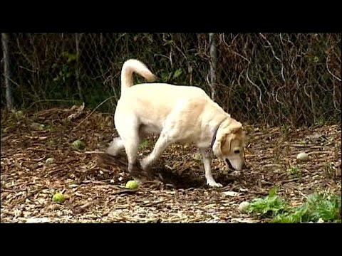 homeowners face fines for dog poop in their own yard youtube
