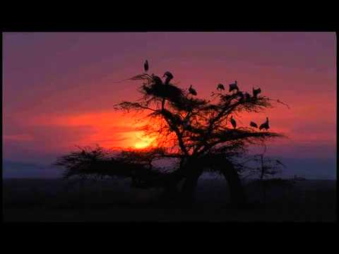 Africa Land Of The Sun AFRICA: SAVANNA HOMECOMING