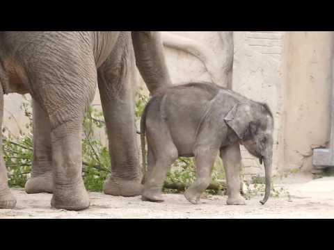 Baby Elefant mit 3 Elefanten, Zoo Leipzig, Sachsen, Deutschland