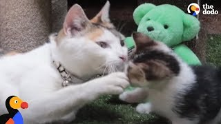 Kittens Reunited With Mom After Rescue From Factory | The Dodo