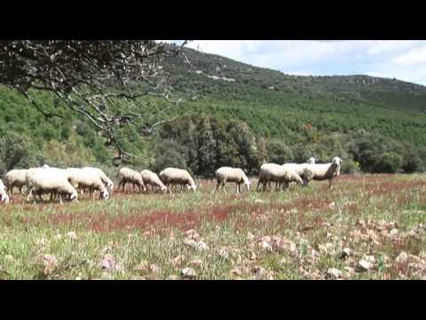 Ganadería Ecológica - 2009