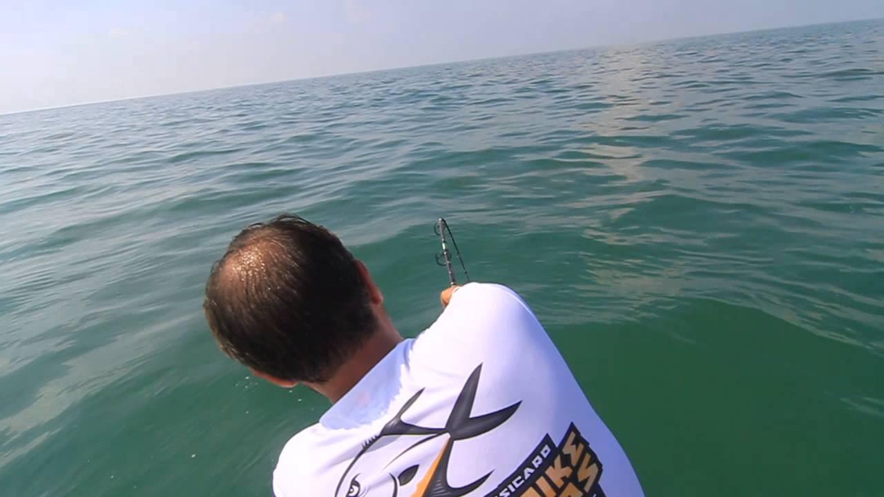Shark fishing with light tackle spinning gear florida for Shark fishing gear for beach