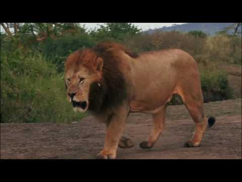 Най-смъртоносните животни на света!