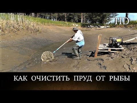 КАК ОТКАЧАТЬ ПРУД И ОЧИСТИТЬ ОТ ВСЕЙ РЫБЫ своими руками / Водоём в хозяйстве на своём участке