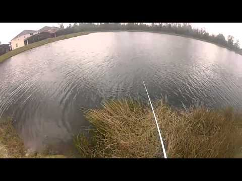 Kissimmee Florida Bass Fishing
