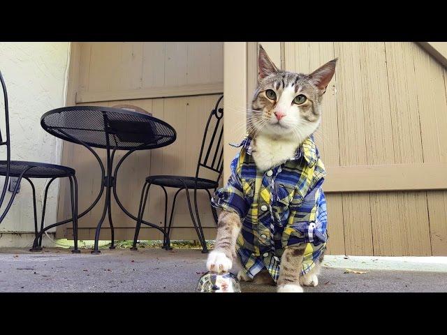 my cat, pecan the nut, rings bell for treats: pavlov's kitty!