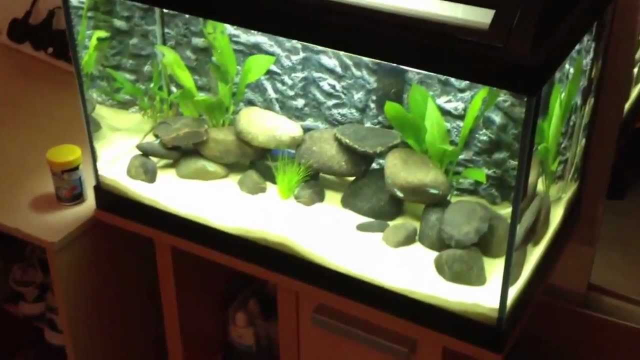Tropical fish tank 60 litre cycle 2nd update youtube for Decoration aquarium 60 litres