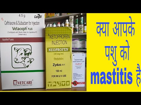 Download Video पश हट नकलग 2 दन म