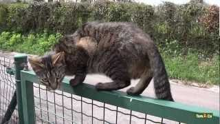 Comportement social - Mon chat - Tom&Co