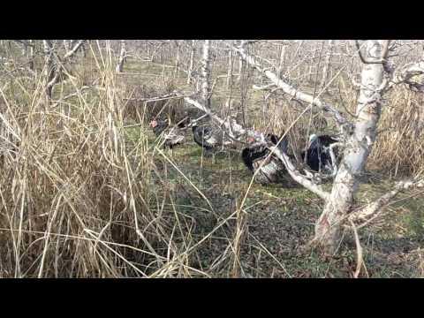 Encuentro peligroso con animales salvajes; efectos colacterales del gobierno de Macri