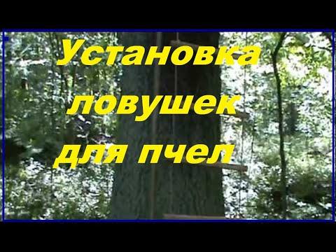 как сделать ловушку для пчел ловля роев в лесу