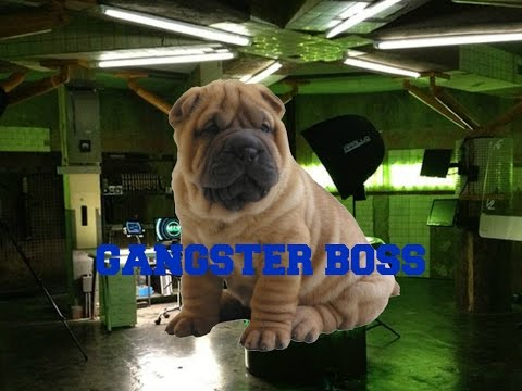 Gangster Boss #1