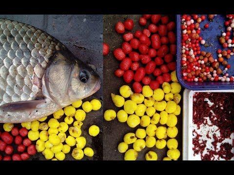 рыбалка на сазана на донку видео