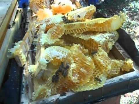Высокая ловушка для пчел