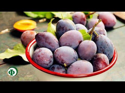 382 Слива – целебное средство для пищеварения