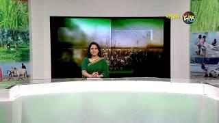 Deepto Krishi/দীপ্ত কৃষি - ভাসমান খাচায় মাছ চাষ/নরসিংদী, পর্ব ৪৭