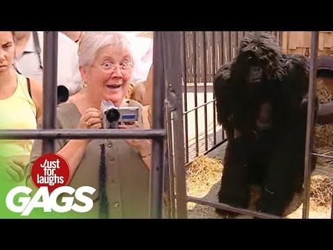 El ataque del gorila