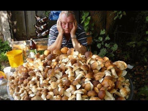 Как вырастить много белых грибов на своем участке (август)