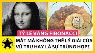Tỷ Lệ Vàng Fibonacci – Mật Mã Không Thể Lý Giải Của Vũ Trụ Hay Chỉ Là Sự Trùng Hợp?