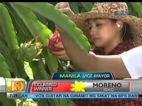 Unang Hirit: Pag-ani ng dragon fruit sa Indang, Cavite
