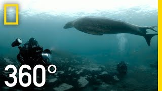 POLAR OBSESSION 360 | National Geographic
