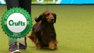 Hound Group Judging and Presentation   Crufts 2017