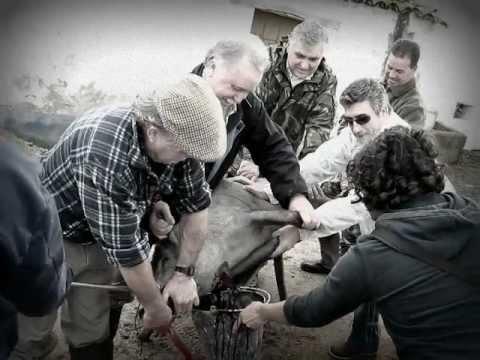 Matança do porco a moda antiga