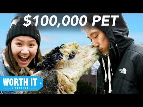 $17 Pet vs. $100,000 Pet   buzzfeed