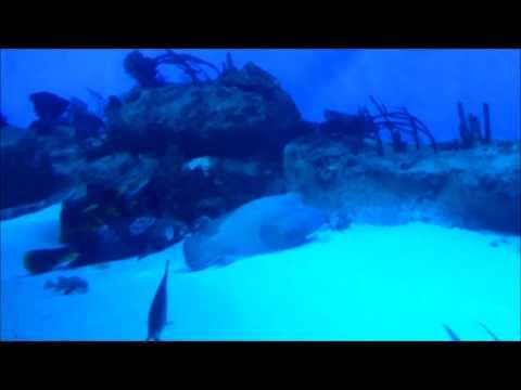 ПОДВОДНЫЙ МИР ОКЕАНА. АКУЛЫ, МУРЕНЫ И БОЛЬШИЕ РЫБЫ, sea world (забавные животные)