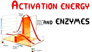 Activation energy and Enzymes (Animation)