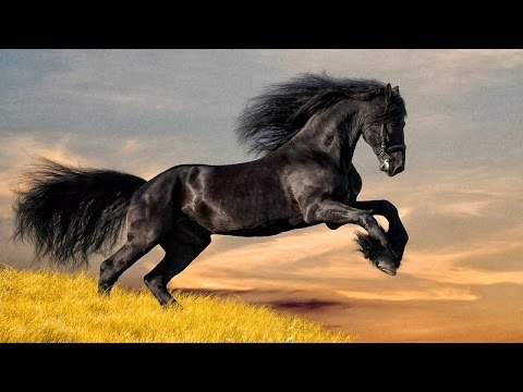 10 Самых Дорогих Лошадей в мире