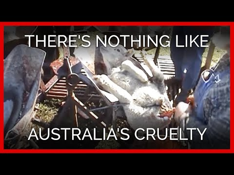There's Nothing Like Australia's Cruelty