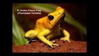 12 Most Deadly Frogs