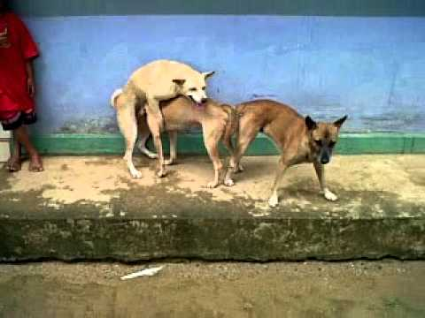 Dog's  Threesome.3gp video