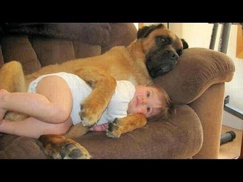 Приколы с детьми и животными - смешно до слез! Как животные заботятся о детях