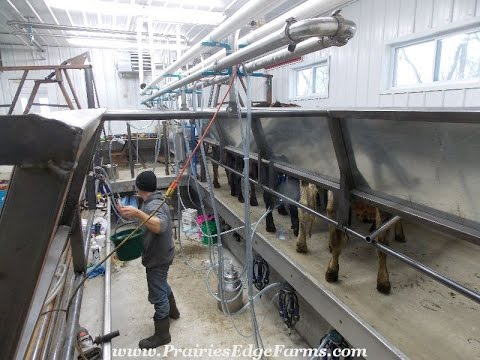 New TRANS Iowa Low-cost Parlor Milking Facility - 2015