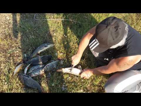 как ловить рыбу живодером