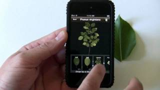 LeafSnap iPhone app demo: ID trees by taking a pic of a leaf