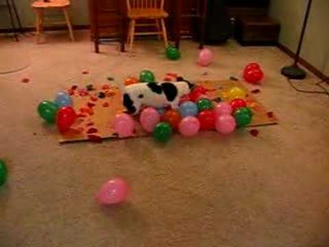 DOG vs. BALLOONS II, This time it's personal