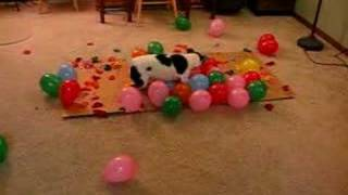 DOG vs. BALLOONS II, This time it